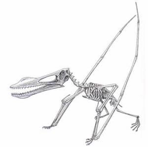 Anhanguera Santanae, dentro da posterior classificação de Kellner que sugeriu retirá-lo do gênero Araripessauro. Disponível em: <http://www.geocities.com/artursantana/>
