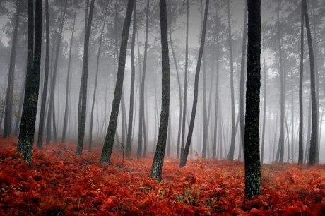 Nas sociedades tribais, a floresta era a porta para o outro mundo.