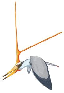 Reprodução de um pterossauro do gênero Nuctosauros.
